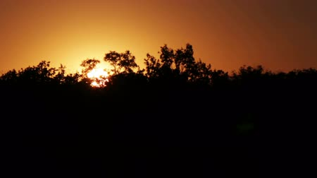 Пенсильвания : The orange sun is setting behind the horizon in the background silhouette of trees.