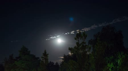 venkovské scény : Night moon rises on the horizon and trees on the background of the night stars and clouds.