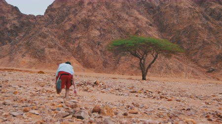 apocalyptic : Lost in the Desert Man Runs to the Green Tree and Shade