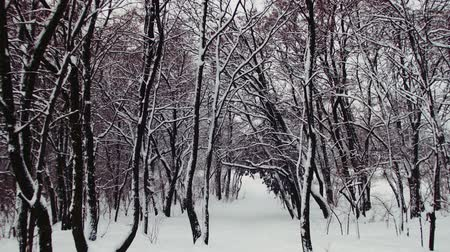 país das maravilhas : Snowy Winter Forest Stock Footage
