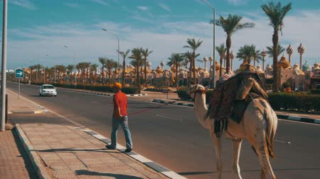 egyiptom : Egyptian Man with Camel go along the Road in a Tourist Place near the Market Stock mozgókép