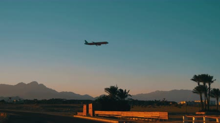 final destination : Passenger Plane in the Sky Landing on the Background of Mountains and Palm Trees in Egypt.