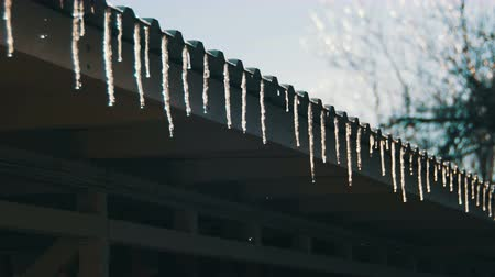 saçak : Winter Icicles Melting on the Roof Under the Spring Sun and Dripping from their Tips