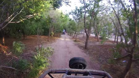 quad bike : Driving Quad Bike along a Forest Road in the Desert of Egypt Stock Footage