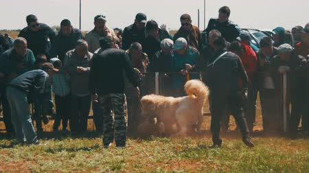 harc : Dog Fights Show. Animal Fights. Crowd of People Watching the Battle of Bloodied Dogs