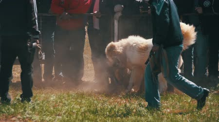 guarda costas : Dog Fights Show. Crowd of People Watching Violent Battle Between Bloody Dogs in Slow Motion Stock Footage