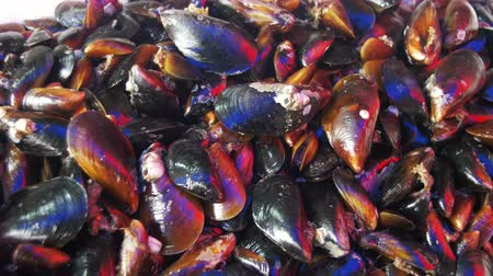 aphrodisiac : Fresh Seafood Mussels on the Counter of the Fish Store