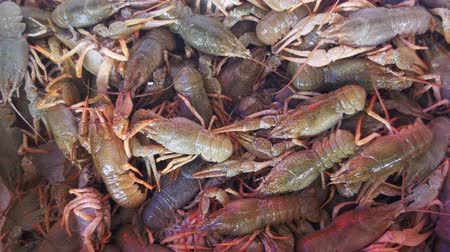 ıstakoz : Live Red Crayfish on the Counter Fish Market