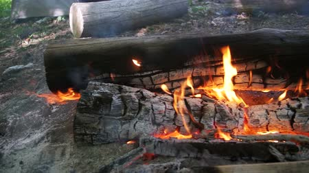 sacramental : Bonfire of the Branches Burn in the Forest. Slow Motion