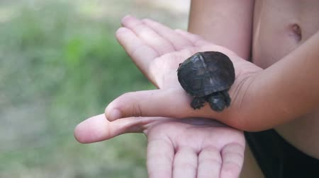 scripta : Boy Holding a Small Turtle in the Palm of your Hand that Creeps. Slow Motion Stock Footage