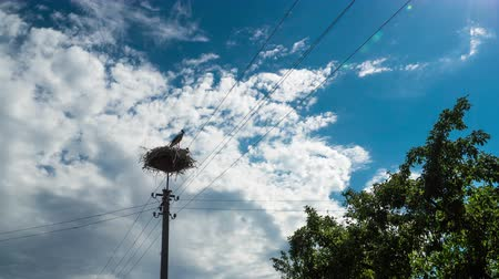 ciconiidae : Storks in a Nest on a Pillar in Village. Time Lapse Stock Footage