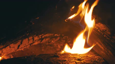 voluntário : Bonfire Lit at Night in the Forest