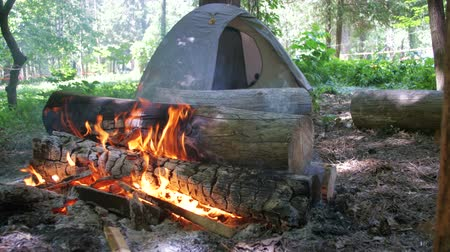 sami : Bonfire Burns in the Camping Amidst a Tent and Logs in the Forest