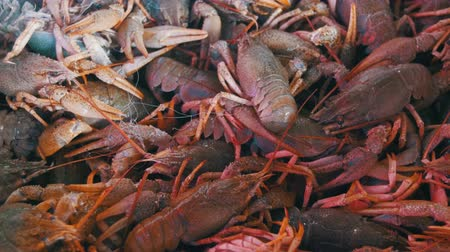 kerevit : Red Crayfish On The Counter Fish Market.