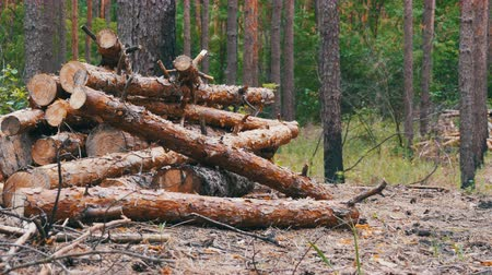 lasca : Felled Tree Trunks in the Forest Vídeos