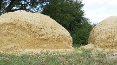 hay pile : Hay stack on the ground in the village Stock Footage