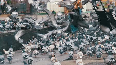 koşuşturma : Old Woman Feeding Pigeons on the Street in Slow Motion