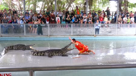 samut : People at extreme crocodile show. Famous Pattaya Crocodile Farm. Thailand. Asia Stock Footage
