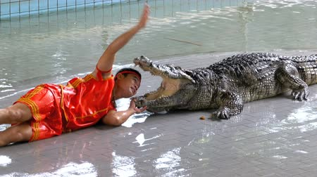 water show : Man thrusts his head into the mouth of the crocodile. Pattaya Crocodile Farm. Thailand Stock Footage