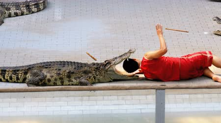 néző : Crocodile show. The trainer puts his head in crocodile jaws. Thailand. Asia Stock mozgókép