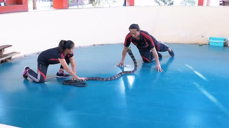 riskantní : Snake Show. Snake Handler shows tricks with poisonous snakes. Thailand