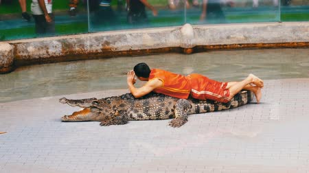 čelisti : Crocodile show. Animal trainer and crocodiles in the arena. Thailand. Asia