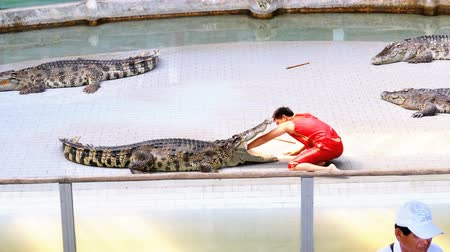 keeper : Crocodile show. The trainer puts his hand in the mouth of the crocodile. Thailand. Asia.