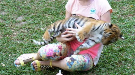parte : Little girl is holding a tiger in her arms and is feeding milk from a bottle. Thailand