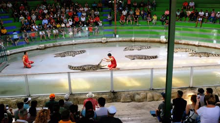 keeper : Crocodile show. Animal trainer and crocodiles in the arena. Thailand. Asia