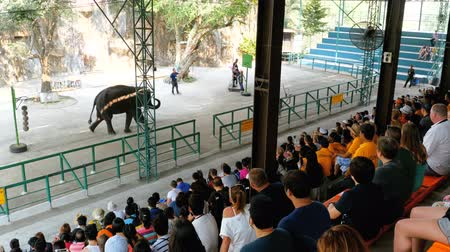 hind : Crowd of spectators on an elephant show is sitting on benches. Thailand