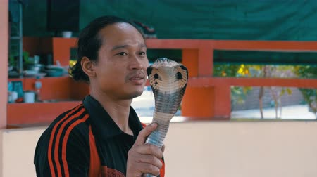 cobra : Snake Show. Snake Handler shows tricks with poisonous snakes. Thailand