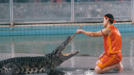 samut : Crocodile show at Famous Pattaya Crocodile Farm. Thailand. Man in the cage with crocodiles