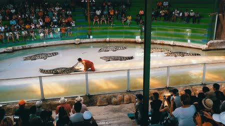 ídolo : Crocodile show. Animal trainer and crocodiles in the arena. Thailand. Asia