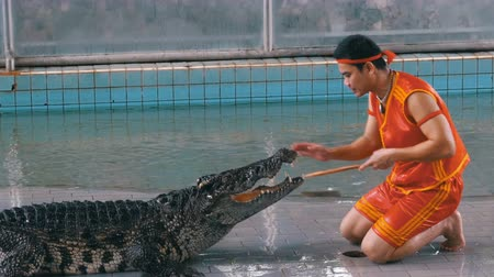 aligátor : Crocodile show at Famous Pattaya Crocodile Farm. Thailand. Man in the cage with crocodiles