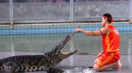 alligator head : Crocodile show at Famous Pattaya Crocodile Farm. Thailand. Man in the cage with crocodiles