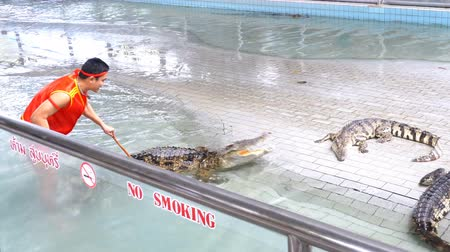 čelisti : Crocodile show at Famous Pattaya Crocodile Farm. Thailand. Man in the cage with crocodiles