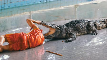 keeper : Man puts his head in crocodile jaws. Pattaya Crocodile Farm. Thailand