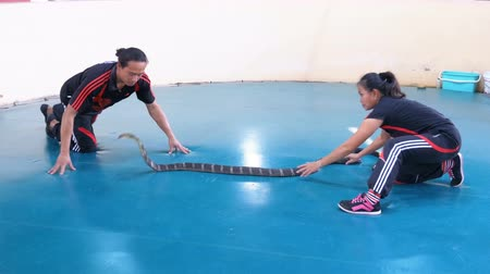 veszélyes : Snake Show. Snake Handler shows tricks with poisonous snakes. Thailand