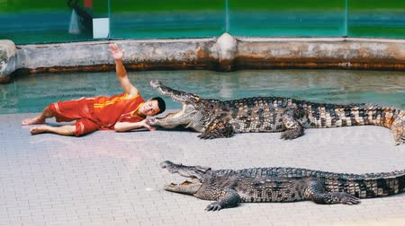 keeper : Crocodile show. The trainer puts his head in crocodile jaws. Thailand. Asia Stock Footage