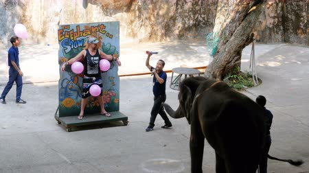 probóscide : An elephant with a trunk throws darts at a target with balls. Thailand