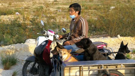 wozek dzieciecy : Dogs are sitting in a trailer of a Thai motorcycle with a stroller. Asia