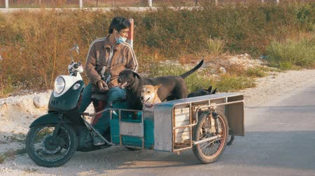 evacuation : Dogs are sitting in a trailer of a Thai motorcycle with a stroller. Asia