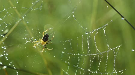 Spider in the web Stok Video