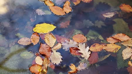 Autumn leaf in river water. Conceptual nature scene. Stock Footage