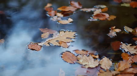 pocsolya : Autumn leaf in river water. Conceptual nature scene. Stock mozgókép