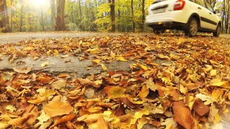 swirling : Car swirling beautiful autumn leaves. Slow motion transportation scene.