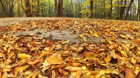 Autumn leaves falling from trees in slow-motion Stock Footage