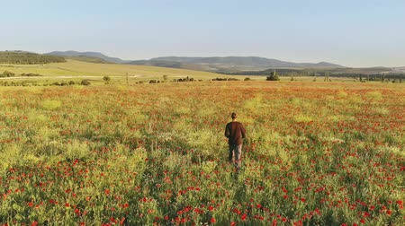fazla : Man walking on poppy meadow. Relax scene.
