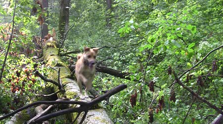 přihlásit : yellow dog walks along a fallen tree in the forest