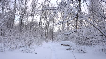 Panorama of the winter forest and the dog Dostupné videozáznamy